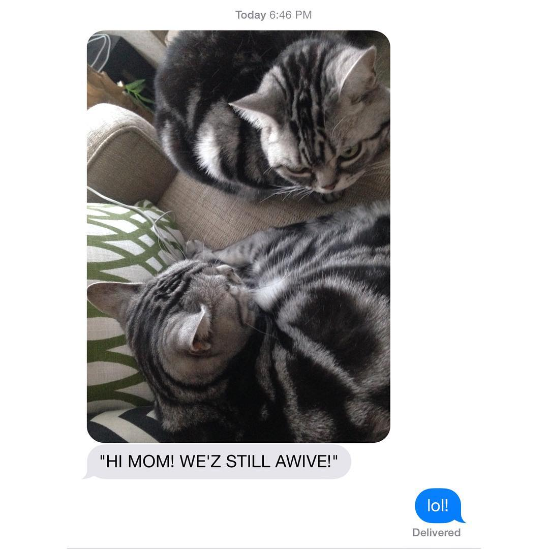 Update from the kitty sitter sophiemeowmeow sophieanddaphne daphnemeowmeow