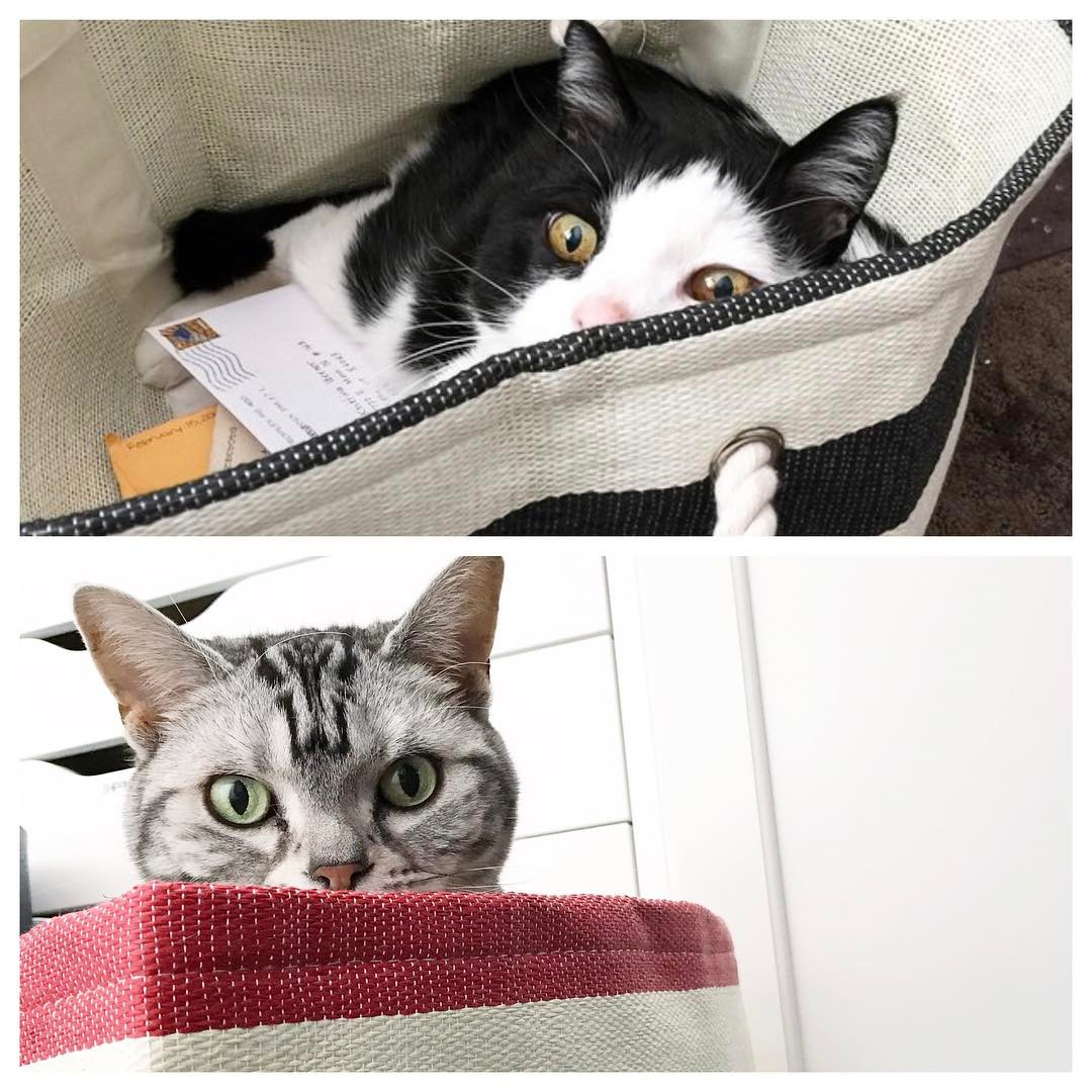 Apparently these striped binsbaskets are irresistible to cats! Top pichellip