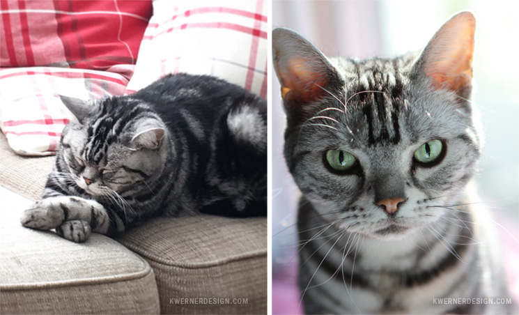 Die Cutting and Sewing Felt - Custom Pet Plush